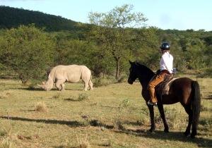 sophie-neville-watching-rhino
